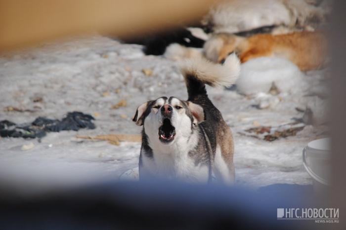 По факту нападения собаки на ребёнкапроходит доследственная проверка