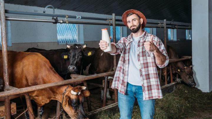 Кинельские фермеры запустили доставку молока и молочной продукции в Самару