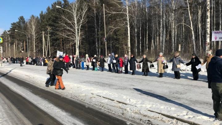 «Выборы прошли, можно пилить парк»: в Краснолесье начали вырубать березовую рощу под новостройки