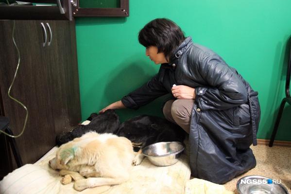 За год САХу нужно отловить пять тысяч собак. Руководитель учреждения просит выделить часть денег на их содержание авансом