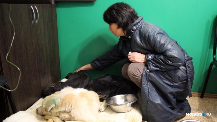 Ловцы бродячих собак попросили у властей денег на новые вольеры — животных некуда рассаживать