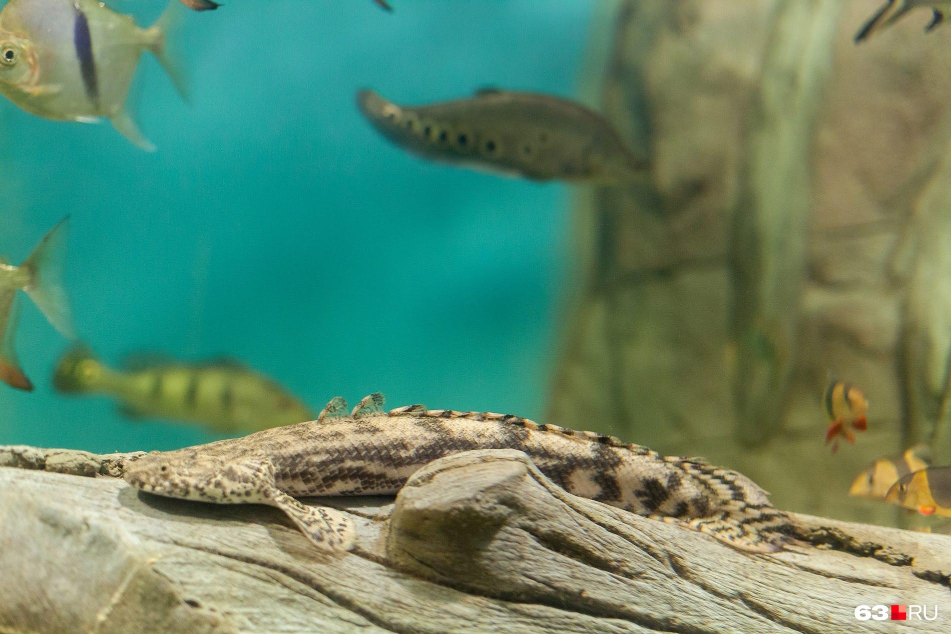 Некоторые рыбы даже умеют маскироваться под коряги