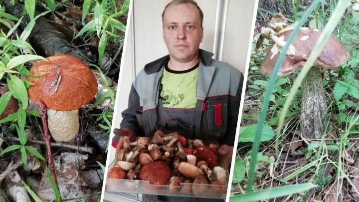 По дедушкиным приметам: ярославец открыл секрет, как правильно искать грибы в лесу