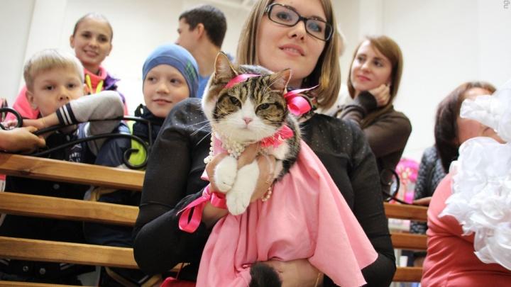 Кошки в костюмах, кино на траве и кавер-вечеринка: планируем выходные в Омске