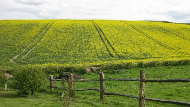 Обозначьте ваши границы: межевание земельных владений