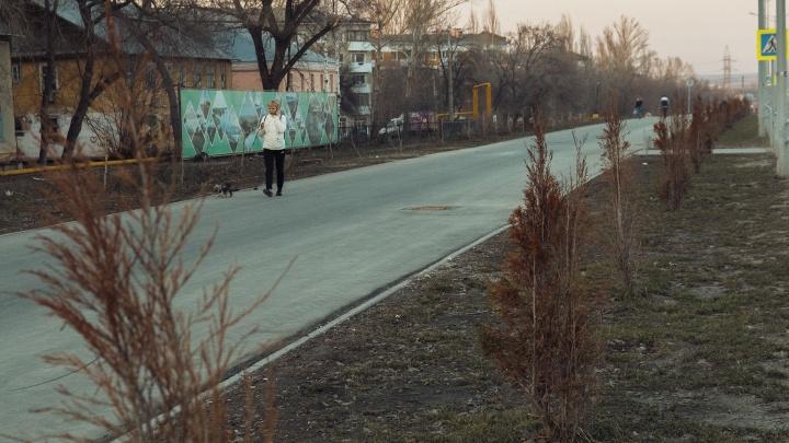 Не гениальная идея: чиновники признались, почему посадили туи на Московском шоссе