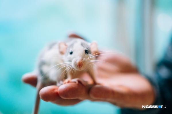 Животных не стоит дарить на праздники людям, которые этого не ждут