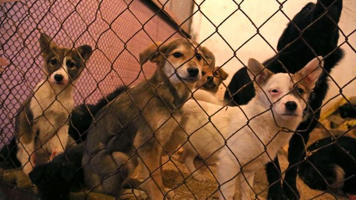 «Живьем никого не сжигаем»: правда и вымысел о скандале в приюте для бездомных животных в Уфе