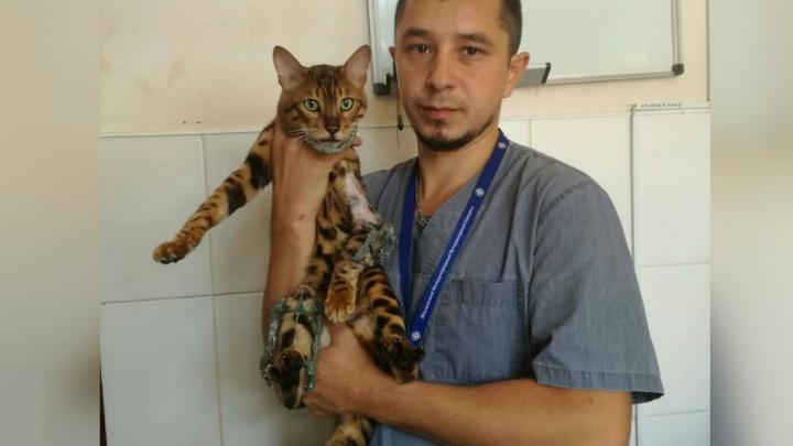 В Уфе ветеринары собрали робокота: питомца восстановили «по деталям»