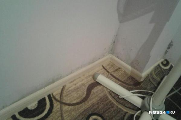 Такая картина на стенах, по словам жительницы квартиры, —только начало. Плесень поднималась на 1,5 метра