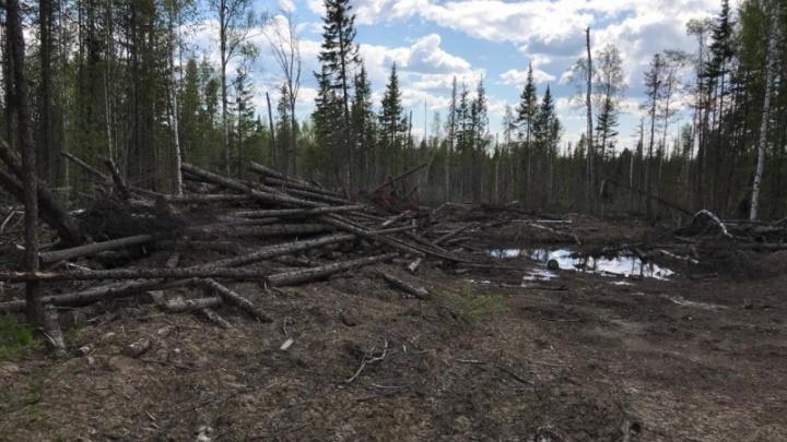 В Канске бизнесмен подделал договоры на вырубку деревьев