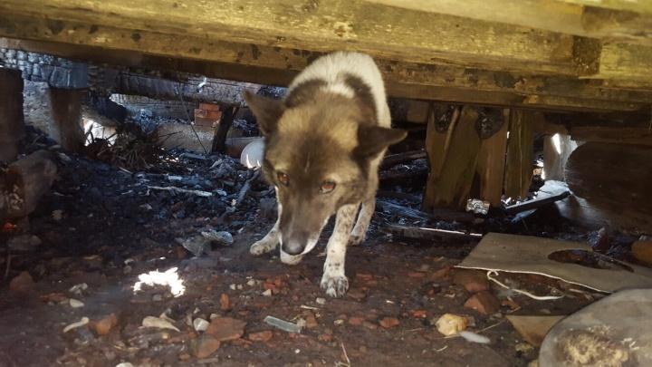 Жители Березников обвинили свою соседку в том, что она пыталась убить собаку, хозяин которой умер
