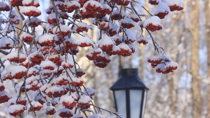 Завтра в Новосибирской области ослабнут морозы: днём будет от –8 градусов