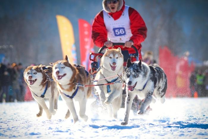 Лыжи и сноуборды, катание на собаках, подарки и новогодняя ёлка ждут гостей курорта Манжерок