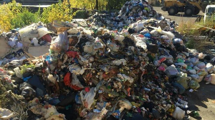 «Вонь стоит невыносимая»: мусор из челябинских дворов свезли на окраину города