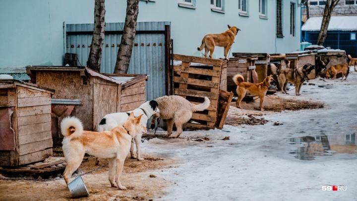 Пермскую службу по отлову животных возглавила бывшая сотрудница колонии