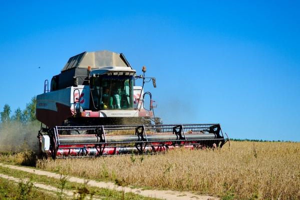 Агрофирмаспециализируется на выращивании пшеницы, ячменя, овса и рапса