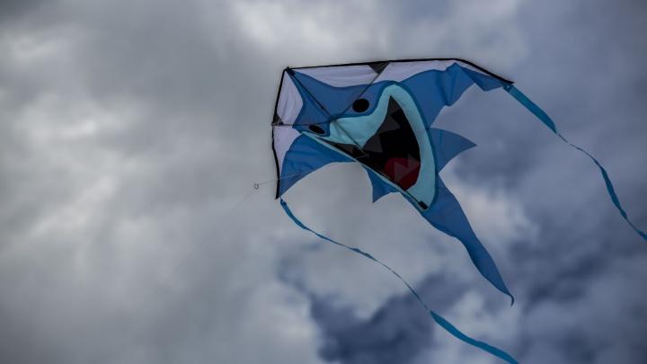 200 воздушных змеев запустили в небо над Новосибирском