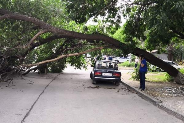 Дерево обрушилось во дворе на ул. Рокоссовского, 50