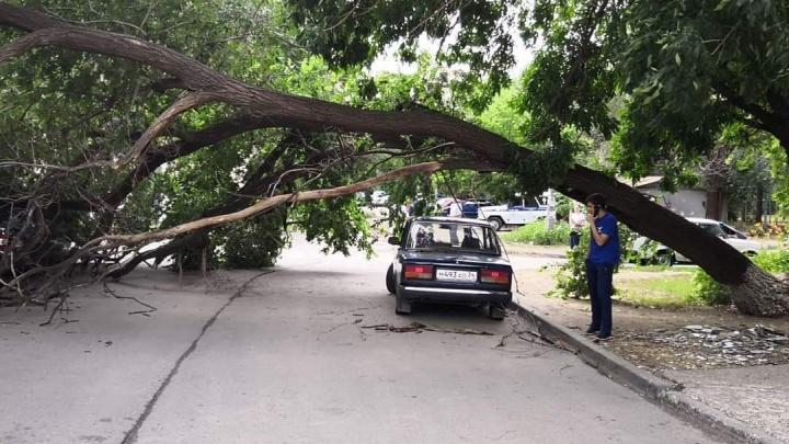 «Хотят отвезти ребенка в новую больницу у ВолГУ?»: в центре Волгограда рухнуло тяжелое дерево
