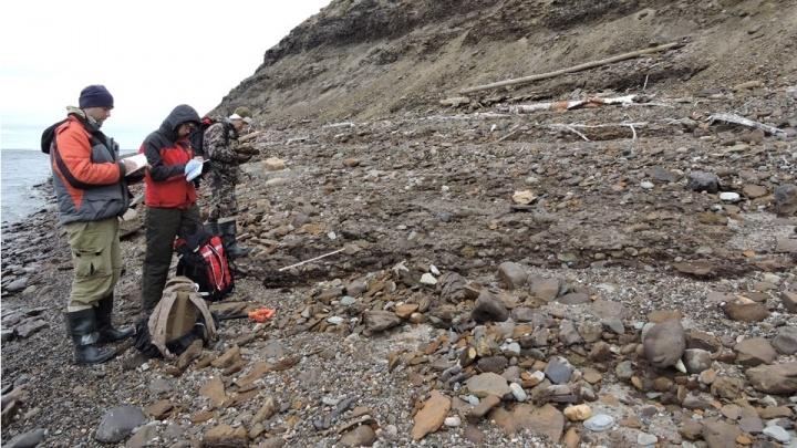 Даже там тепло: новосибирские учёные нашли следы тёплого климата в Арктике