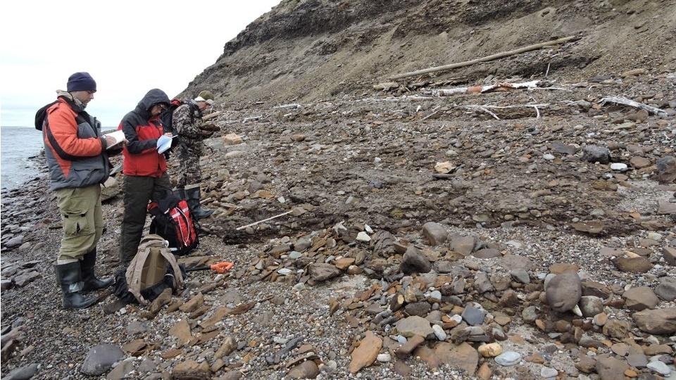 Новосибирские геологи обнаружили следы экзотических растений в Арктике