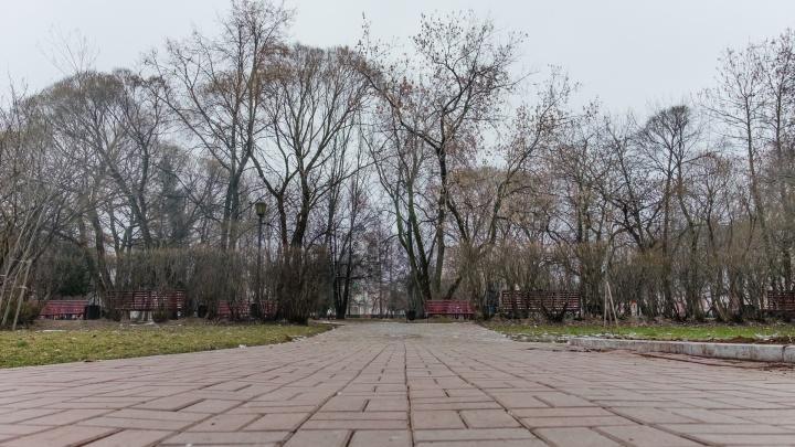 МЧС предупреждает о сильных порывах ветра в Прикамье