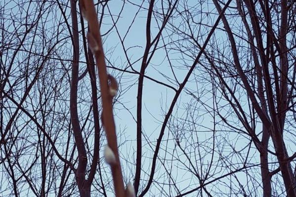 Горожане жалуются на неприятный запах, который можно почувствовать около озера даже зимой