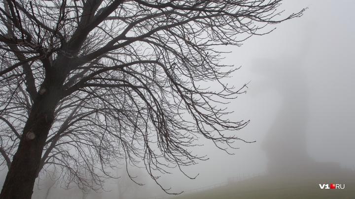 Волгоградская область начнет неделю с оттепели и снежной «каши» на дорогах: прогноз погоды