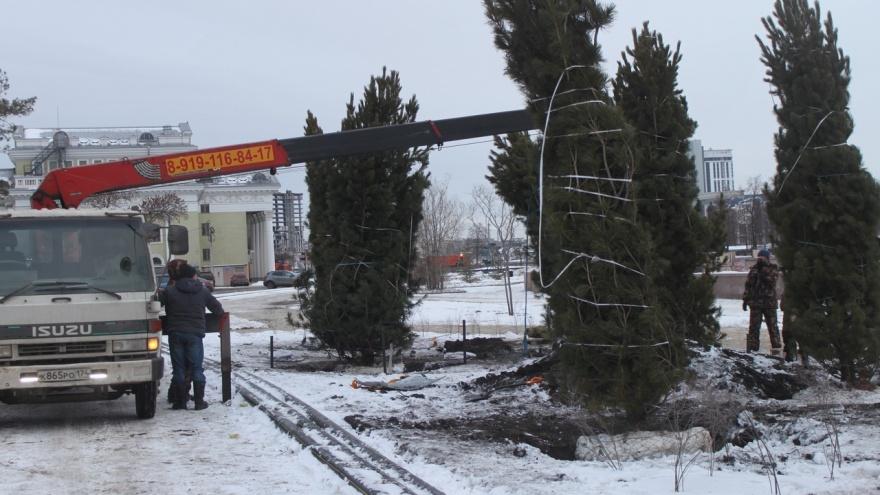 В Челябинске вместо вырубленных тополей у органного зала высаживают новые деревья. Смотрим какие
