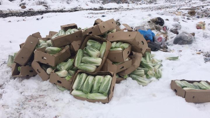 В Кургане уничтожили почти тонну пекинской капусты