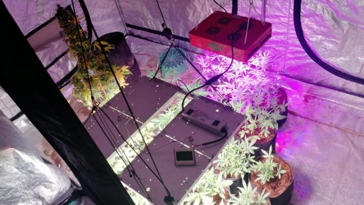 Красноярцы арендовали квартиру и переоборудовали ее в теплицу ради выращивания конопли