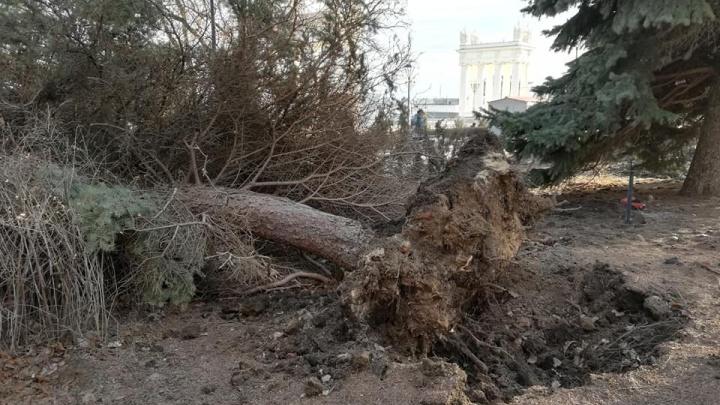 Деревья вырывает с корнем, а остановки катаются по улицам: в Волгограде разгулялась непогода