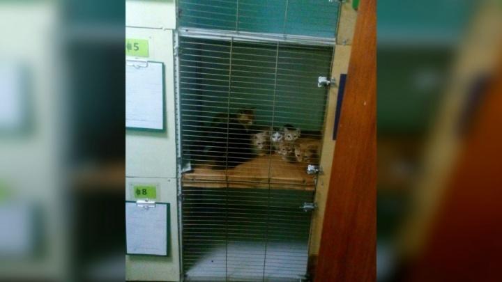 В Уфе приставы выселили из квартиры одиннадцать кошек