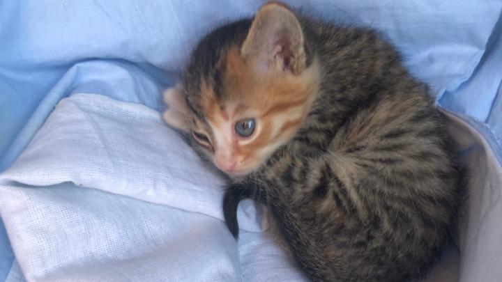 В Новосибирске таксист спас крошечного котёнка — и теперь возит его в машине