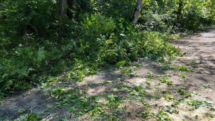 Валятся чаще, чем обычно: спасатели объяснили, почему падают деревья в городе