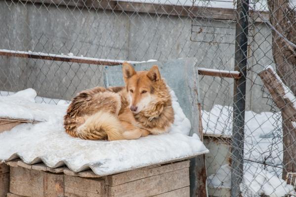 На время карантина в поселке запретили продавать животных