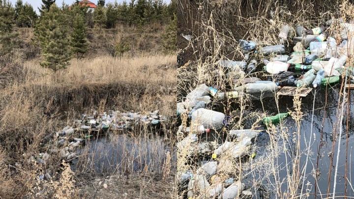 Трупы животных, мусор и гонщики: жители поселка «Новалэнд» ужасаются соседству с дачниками