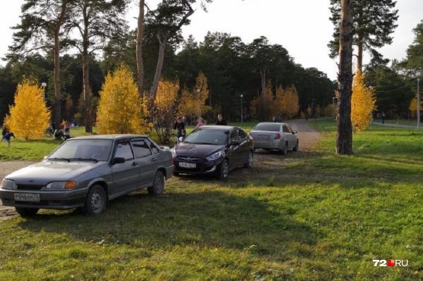 Самые наглые автомобилисты умудрились заехать на территорию лесопарка
