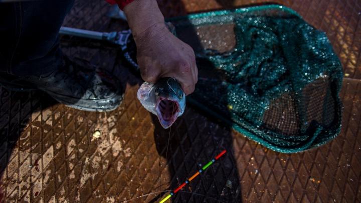 Закинули невод — попали в полицию: на южноуральском озере задержали рыбаков с краденым уловом