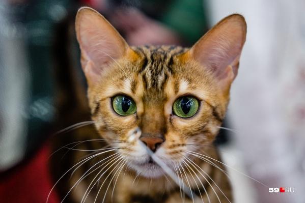 Трогательный взгляд бывает не только у мультяшного кота из мультфильмов про Шрека