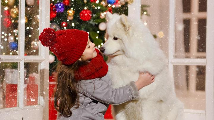 Достойно лайка: идеи, с которыми новогодние каникулы пройдут не зря