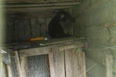 Медвежонок забрался на дерево возле санатория за Канском