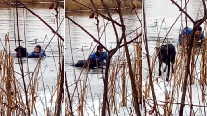 В Кургане спасатели достали провалившуюся под лед собаку