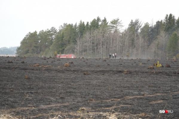 Лесные пожары распространяются очень быстро