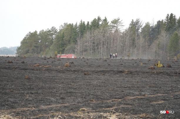 Нельзя разводить костры в лесах и парках: в Прикамье объявлен особый противопожарный режим