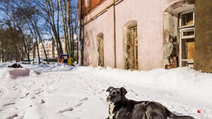 «Аномалии побьют рекорды»: синоптики подробно рассказали о погоде зимой и весной