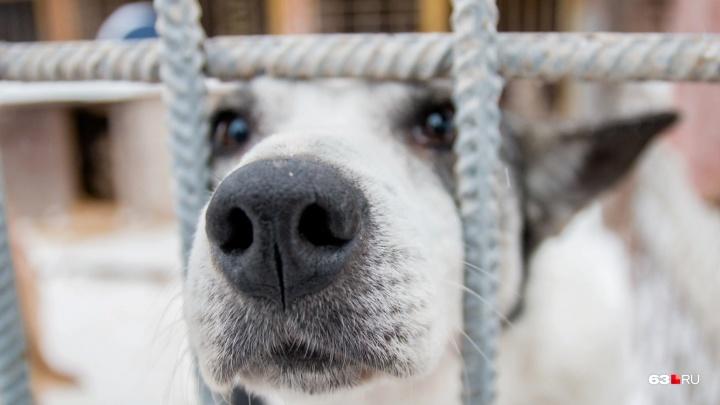 В следующем году отлов каждой бездомной собаки обойдется почти в 2400 рублей