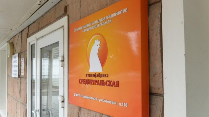 Природоохранная прокуратура обвинила Среднеуральскую птицефабрику в хранении помета в лесу