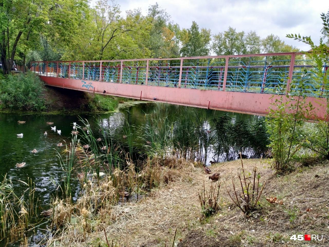 С моста люди кормят уток, когда по мосту бегут несколько человек, он трясётся